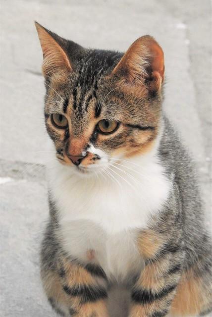 Bianco Olympico - Hotel Cat On Patrol