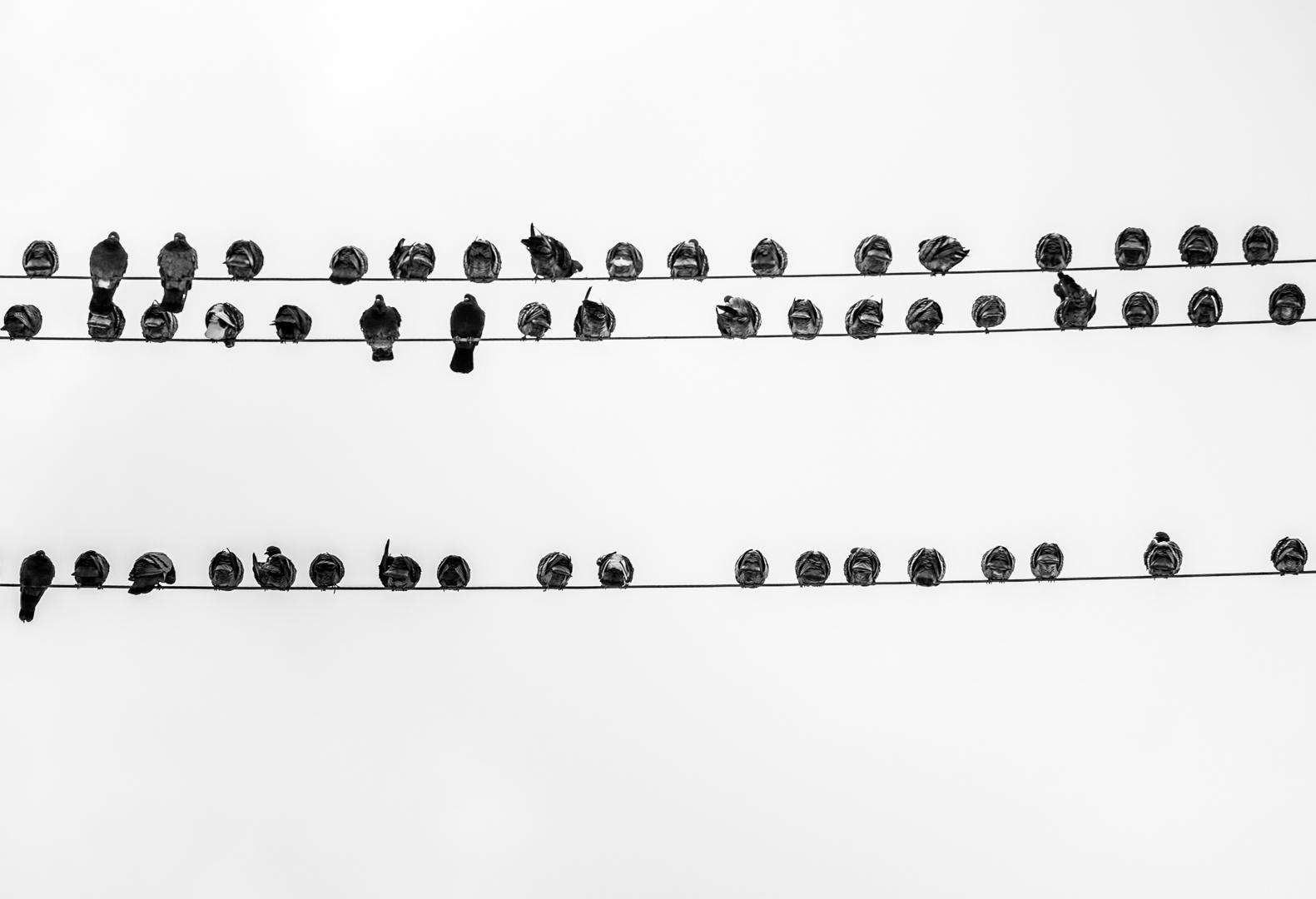 Symphonie aviaire