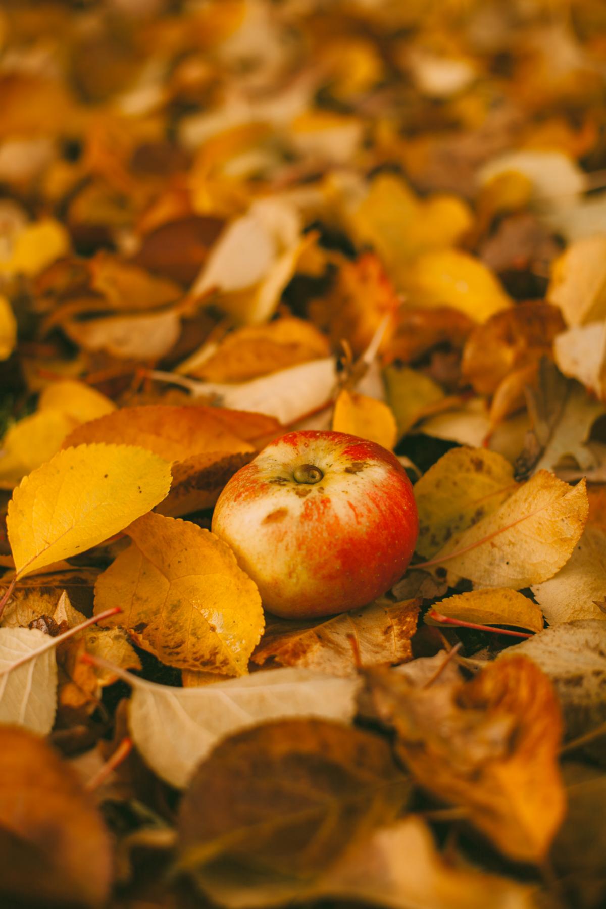 yelloworchard-7