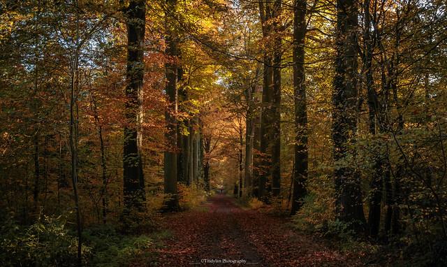Autumn colors 7