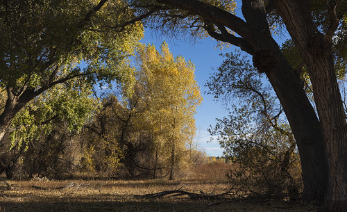 cottonwood_trail_20191110_157
