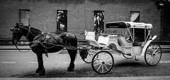 DAV_3821LRBW Carro de caballos