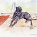 2019 1111 grayhound