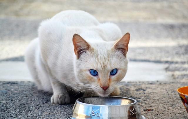 Stray kitten - Gatito callejero