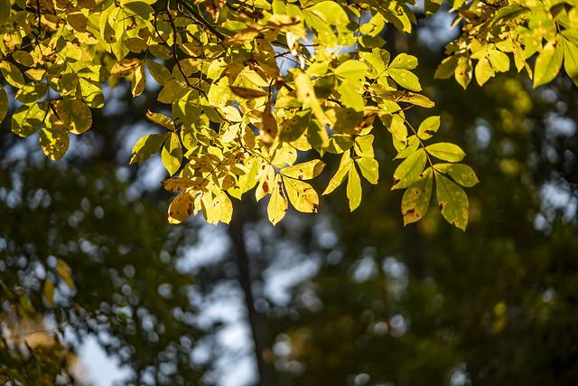 Rokinon/Samyang AF 85mm f/1.4 FE