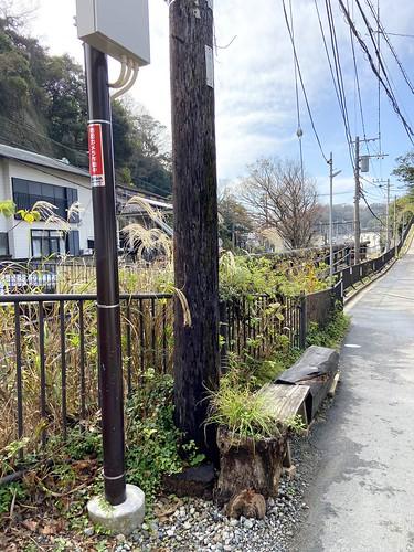 鎌倉のお寺巡り 極楽寺