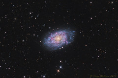 NGC 7793 - Flocculent Spiral Galaxy in Sculptor