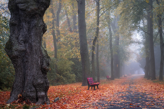 autumn morning in the park - Herbstmorgen im Park