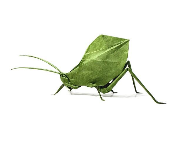 Leaf Katydid - Brian Chan