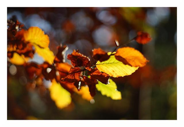 Herbstfarben [explored]