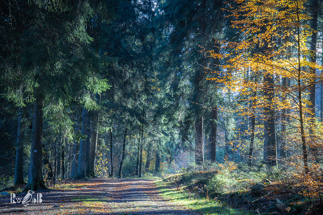 """""""And into the forest I go, to lose my mind and find my soul"""" (John Muir)"""