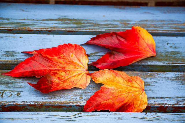 Kräftiger Herbst