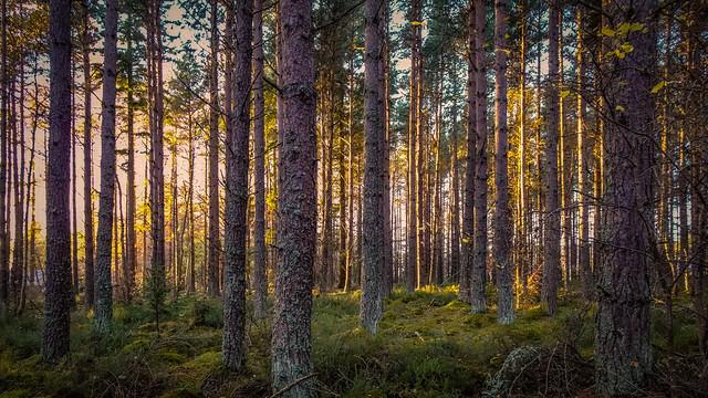 Tore Woods