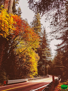 RETRO-AUTUMN AVENUE-2019-3024WX4032H-300PPI-- © Cody Jacobson-ZEN MOUNTAIN MEDIA all rights reserved
