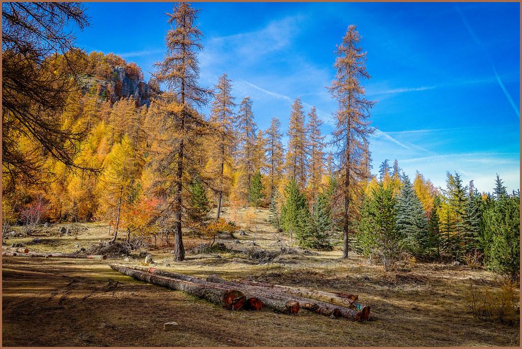 Forest resource
