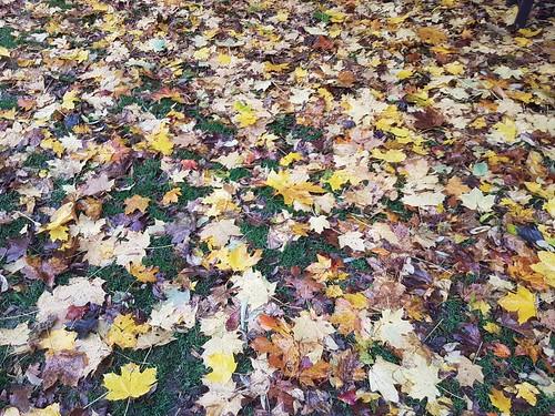 Autumn colour (threejumps)