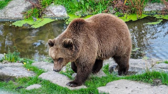 #Bear - 7696