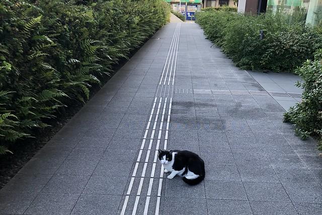 Today's Cat@2019-11-12