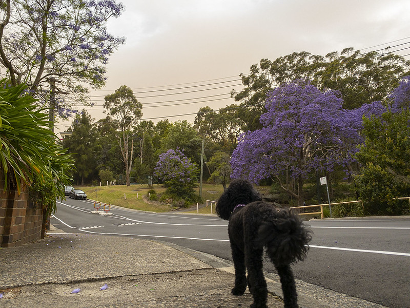 Scully and the bushfire smoke