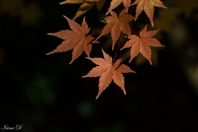 The leaves are changing; I feel poetry in the air.