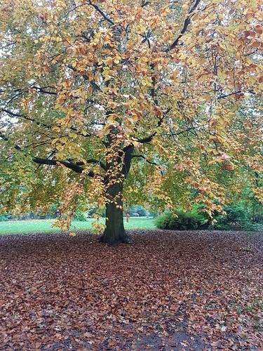 Autumn. (threejumps)