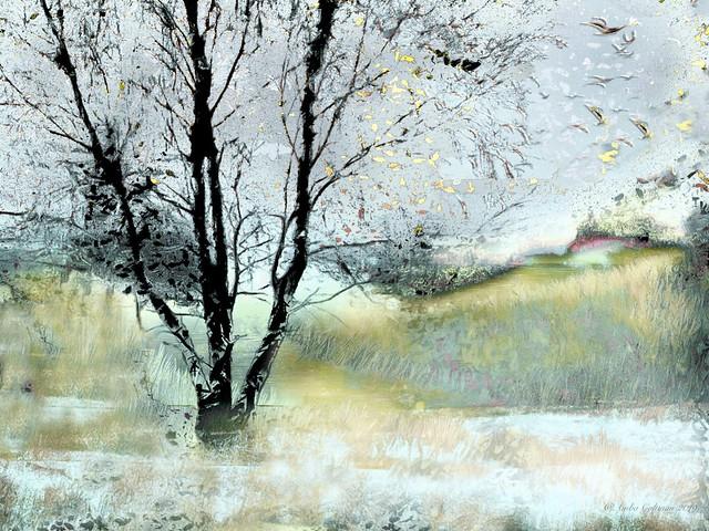Trees Lay Bare