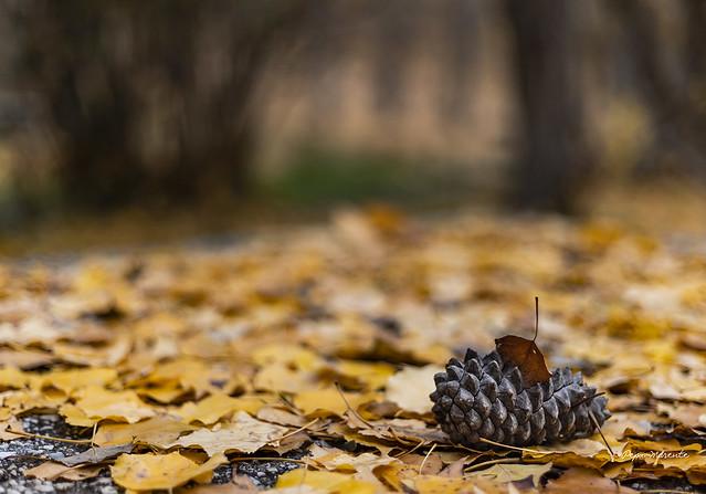 Otoño maravilloso - wonderful autumn