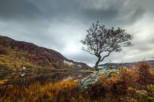 Lone tree at Llyn Dinas