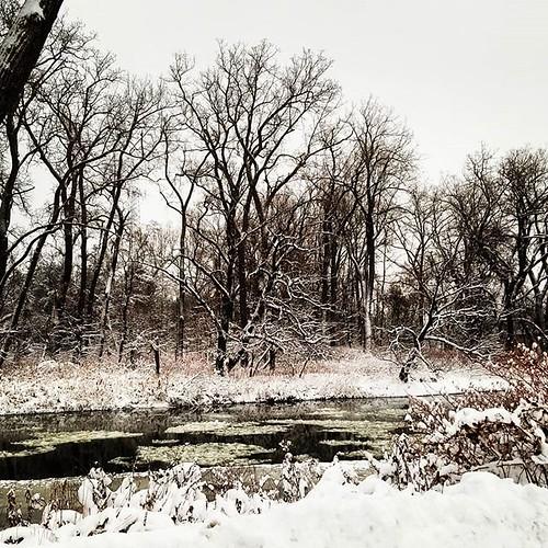 November in Western New York #snow #wny