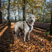 Teddy in Longmeadow Lane Woods