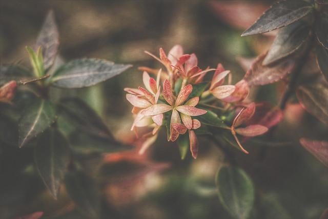 « La nature est là qui t'invite et qui t'aime. Plonge-toi dans son sein qu'elle t'ouvre toujours. »  Alphonse de Lamartine