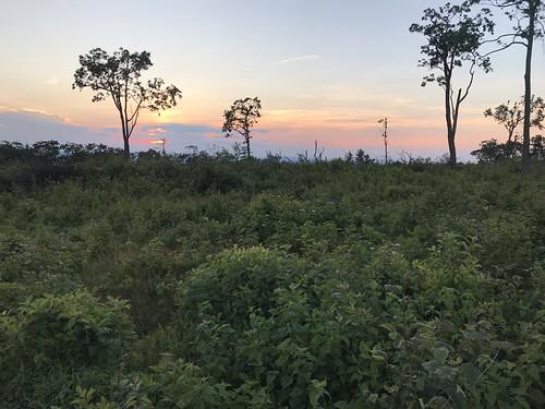 tuscaroramountain buchanonstateforest f19woo35 lsr landscapescalerestoration franklincountypennsylvania landscape scruboakbarren scruboakshrubland