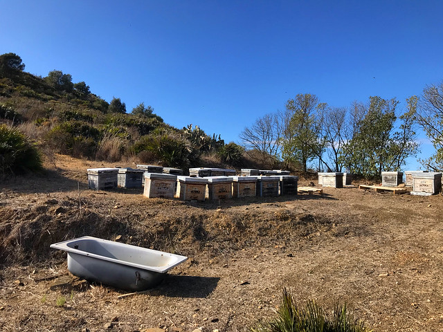Beehives & A Bath