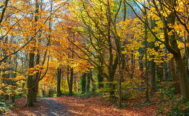 Autumn Collection - 7 - colours