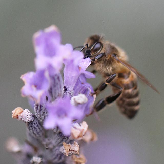 Re-edit Honey Bee 51