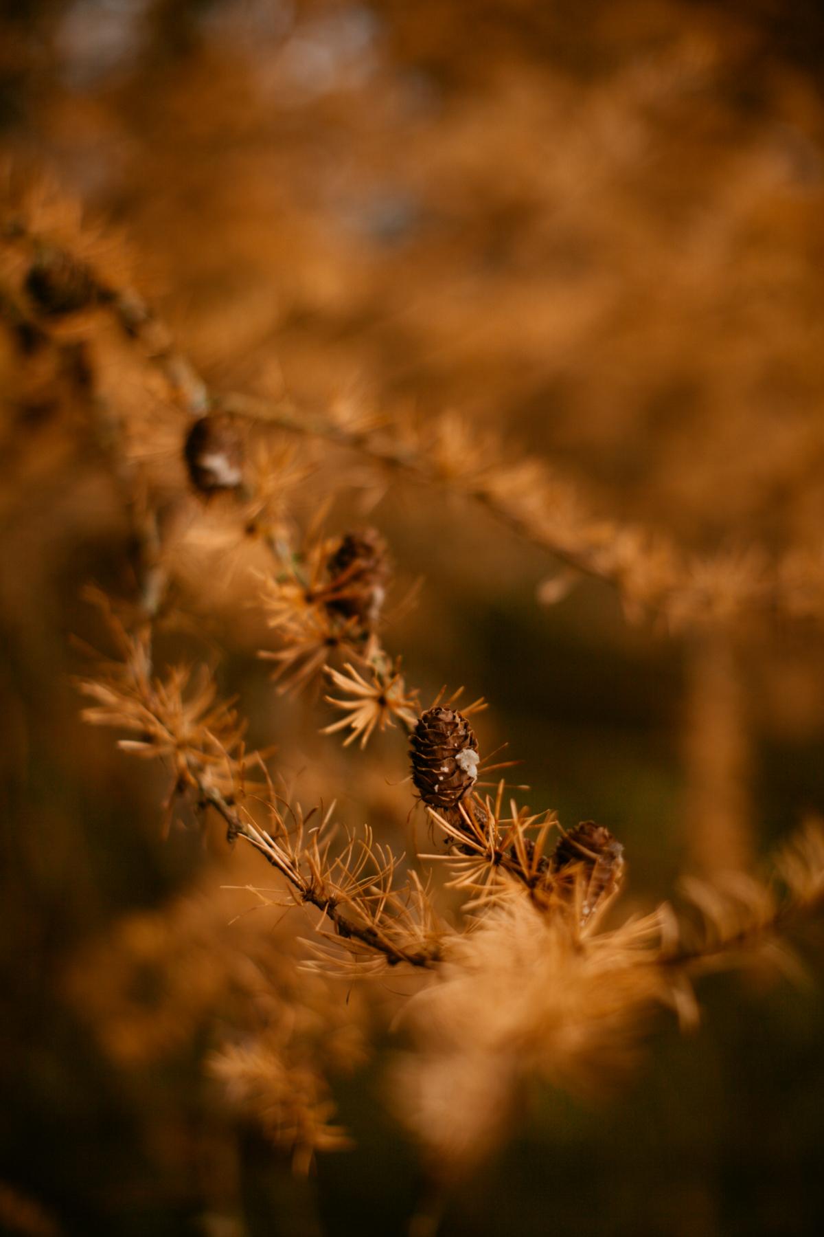 pinecones-35