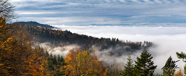 Mist in the Black Forest, Germany Panorama