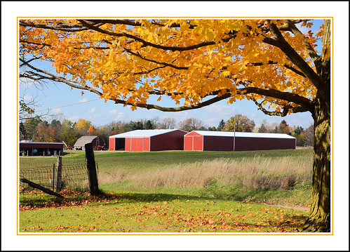 Glorious Autumn in the Michigan Countryside