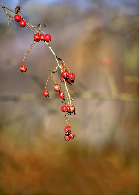Autumn beads
