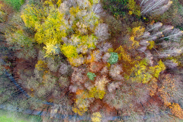 Autumn seen from sky