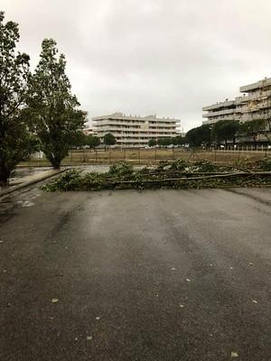 albero abbattutto dal vento