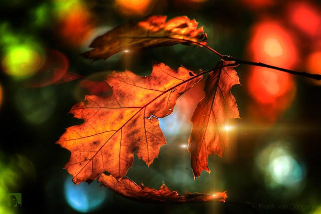 Colors of autumn 2