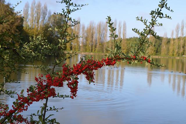 Ardente branche d'automne