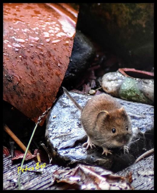 Little mouse 🐁🐭🐁