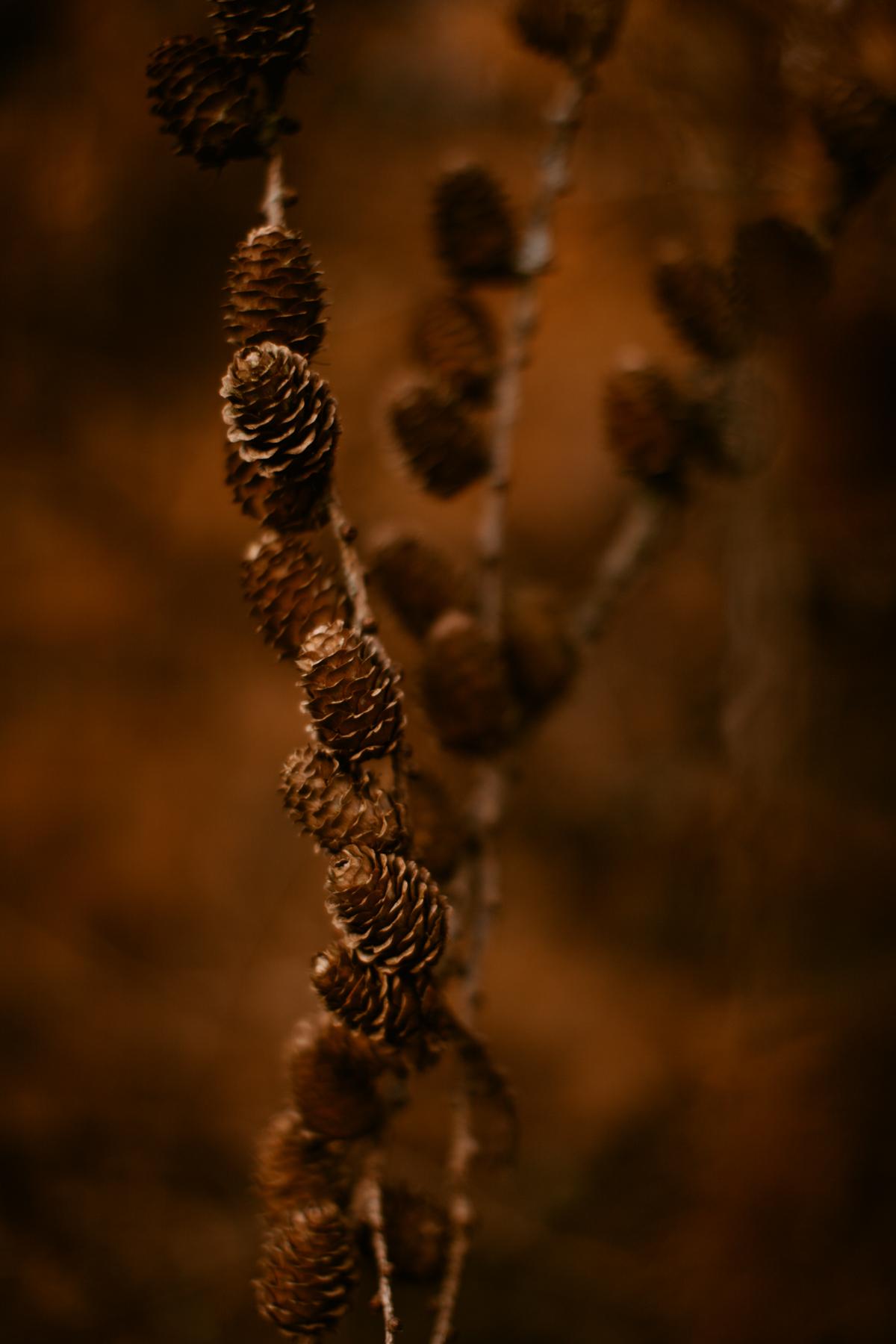 pinecones-7