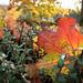 "<p><a href=""https://www.flickr.com/people/spannarama/"">Spannarama</a> posted a photo:</p>  <p><a href=""https://www.flickr.com/photos/spannarama/49056292111/"" title=""Autumn hedge""><img src=""https://live.staticflickr.com/65535/49056292111_8a09177f4b_m.jpg"" width=""240"" height=""160"" alt=""Autumn hedge"" /></a></p>"