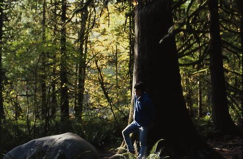 Lynn valley forest