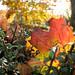 "<p><a href=""https://www.flickr.com/people/spannarama/"">Spannarama</a> posted a photo:</p>  <p><a href=""https://www.flickr.com/photos/spannarama/49056509717/"" title=""Autumn hedge""><img src=""https://live.staticflickr.com/65535/49056509717_844ab8068e_m.jpg"" width=""240"" height=""160"" alt=""Autumn hedge"" /></a></p>"