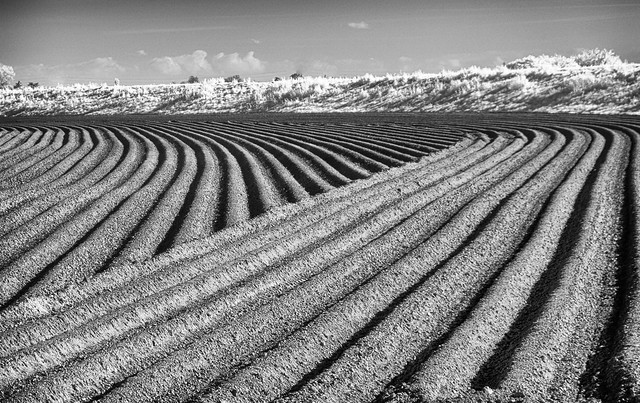 Cultivations