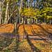 """<p><a href=""""https://www.flickr.com/people/meteorfoto/"""">Meteor Foto</a> posted a photo:</p>  <p><a href=""""https://www.flickr.com/photos/meteorfoto/49056684957/"""" title=""""2019.11.11 Krakowska ławeczka jesienna""""><img src=""""https://live.staticflickr.com/65535/49056684957_e75e84778f_m.jpg"""" width=""""240"""" height=""""159"""" alt=""""2019.11.11 Krakowska ławeczka jesienna"""" /></a></p>  <p>Kraków to miasto piękne i magiczne. Jesienią nabiera dodatkowego pięknego kolorowego uroku.<br /> Są w Krakowie miejsca zachwycające jesienną ekspresją jak ta ławeczka w Parku Lotników Polskich, który miejmy nadzieję nigdy osoby pokroju Betoniusza nie zamienią w betonową pustynię przyjazną jedynie dla deweloperów...<br /> Czyż spacer i odpoczynek w tak pięknych okolicznościach przyrody nie jest wspaniały, prawda? ;-)</p>"""